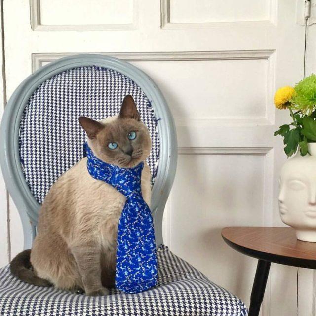 Posado gatuno de hamletcroqueto el gato de gonzalomuino luciendo unahellip